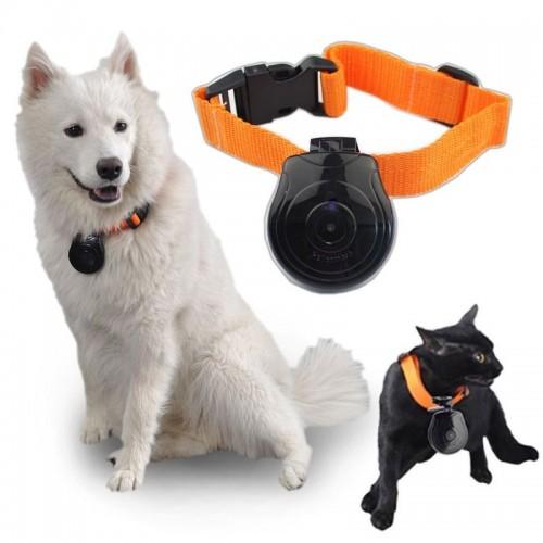 Gadgets Pets